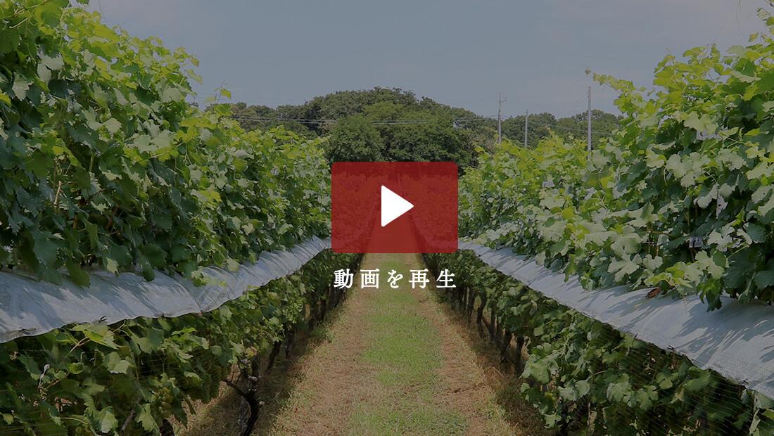 最高のオリジナルワインを求めて 動画